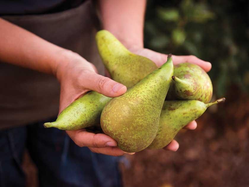 5 trucos para conservar las peras más tiempo | Orchard Fruits | La fruta original