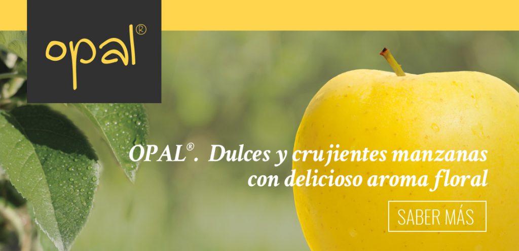 Opal manzana. Banner home | Orchard Fruit